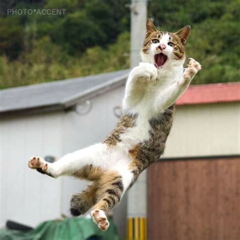 Japanese Photographer Captures Cats Best Kung-Fu Moves (15