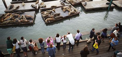 Sea Lion 28th Anniversary: Guided Tours | Pier 39